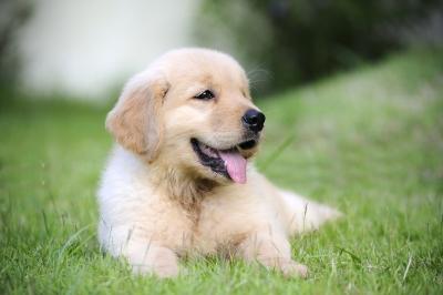choosing pet health insurance